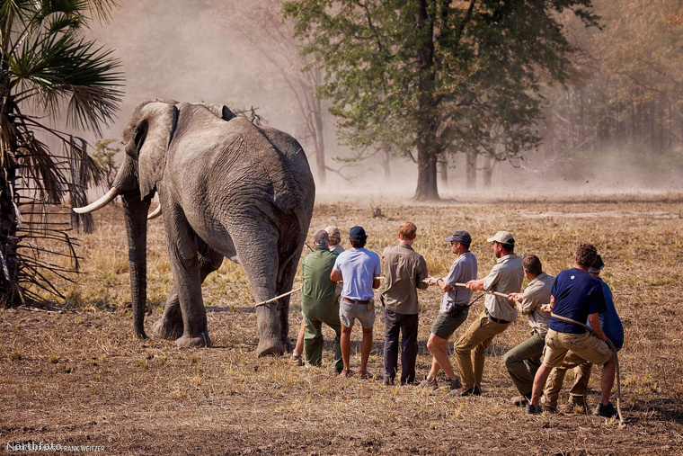 A művelet Malawi állam délen fekvő nemzeti parkjait érinti