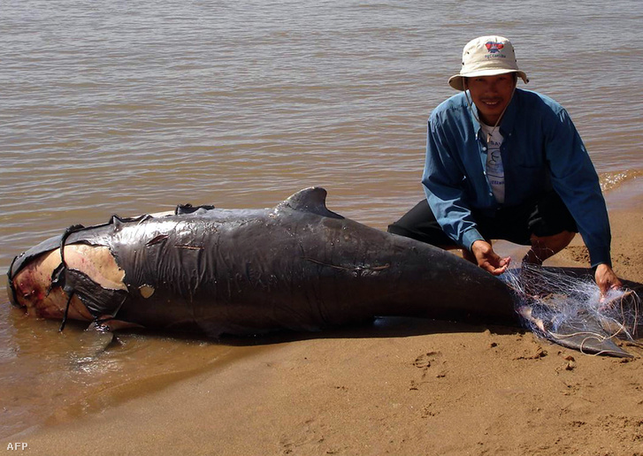 Kambodzsai halászhálóba gabalyodott, ezért elpusztult delfin