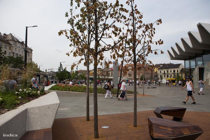 Elpusztult fák a téren 2016. június 30-án