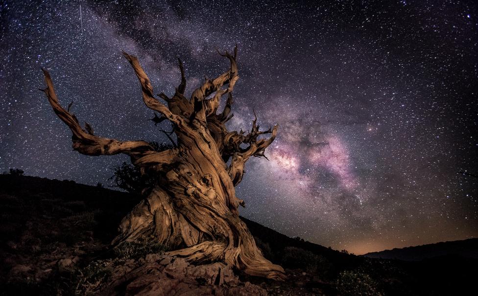 XI. Napnyugtától napkeltéig (kategória) | 1. Ernie E. Suto: Ezeréves fa