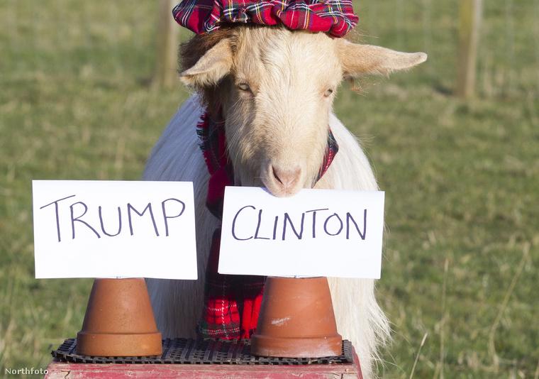 Clintont választotta!