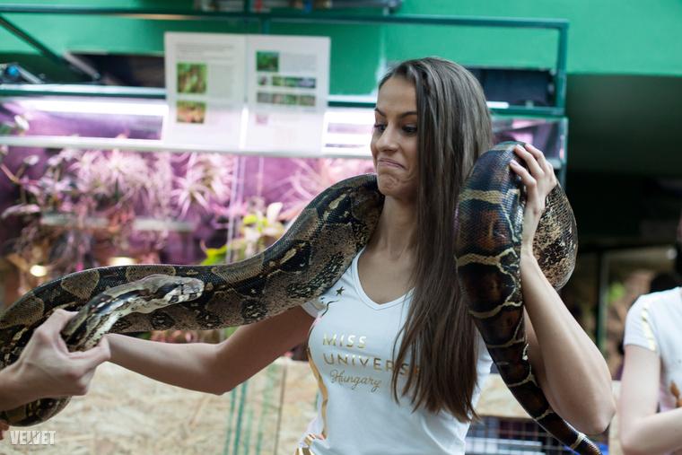 Az extrémek között a legextrémebbek felkapták a kígyót a nyakukba