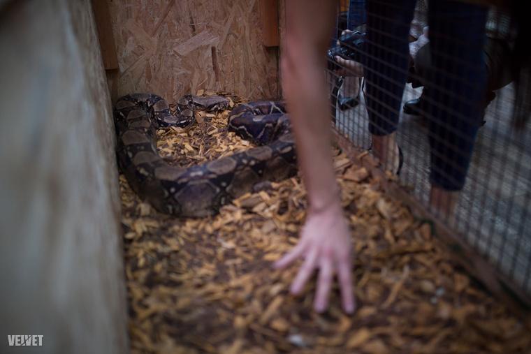 Kígyó terráriumát is átnézték