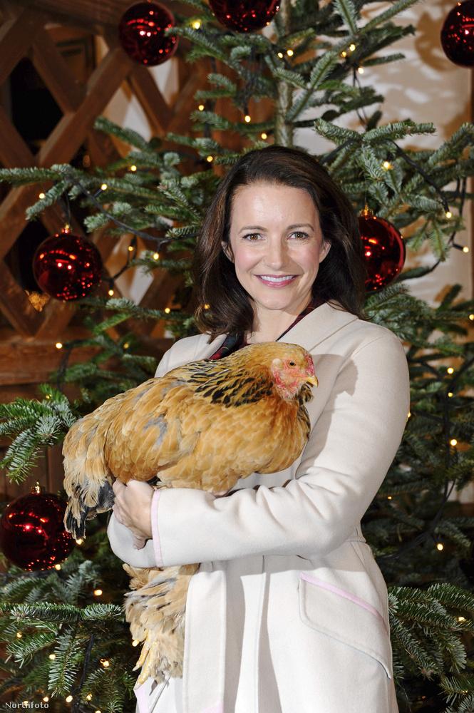 A tyúkos kép megunhatatlan.Úgy képzeljük, hogy Kristin Davis csak tartotta a két tenyerét a karácsonyfa előtt, és a kedves segítők sorra pakolták bele az állatokat