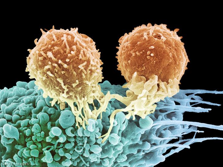 agresszív rákos túlélők