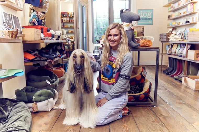 Nagy-Britanniában összeszámolták, hogy mennyi is az annyi, hogyha olyan kutyákról beszélünk, akiknek aranyélete van: több, mint 8 és félmillió