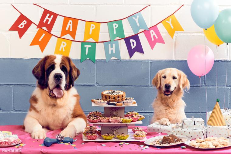Hát így ünnepel egy igazi kutya, akinek brit a gazdája!
