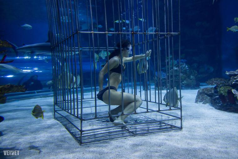Ha már víz, ez a kép sem maradhat ki, amin aMiss Extrém, majd Miss Univers Hungary győztese Bódizs Veronika búvárkodik cápák között