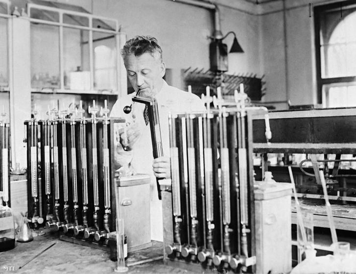 Szent-Györgyi Albert szegedi laboratóriumában, a 30-as években