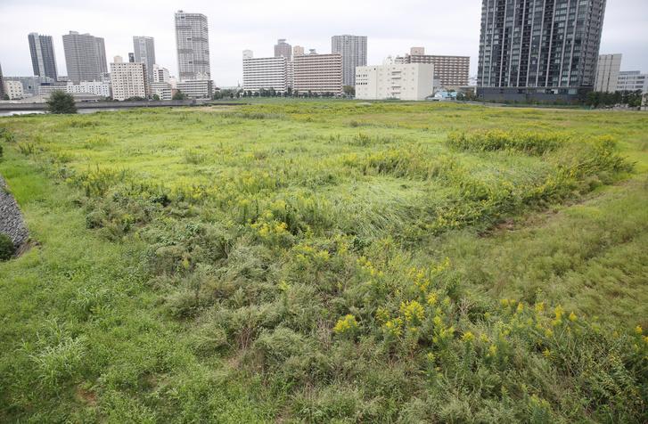 Zöldmezős beruházás: itt épülne az Ariake röplabda-aréna Tokióban