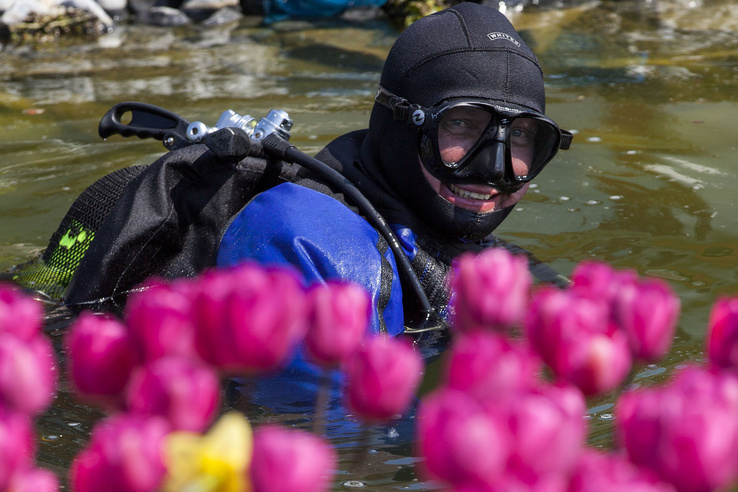 A munka egyik szép része. Sopronyi Richárd egy kecskeméti tulipánmező mellett dolgozik.
