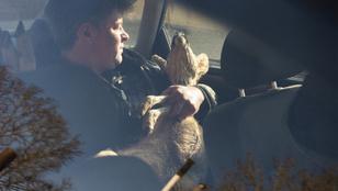 A megmentője karjaiban autózó őznél meghatóbbat ma már úgysem fog látni