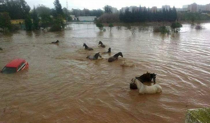árvíz2