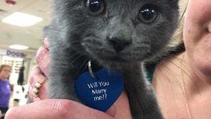 Egy menhelyi kiscicával kérte meg barátnője kezét