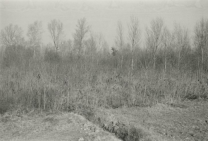 Radnóti Miklós abdai tömegsírjánál készült kép. Gyarmati Fanni 1946. augusztus 12-én felkereste Abdánál a Rábca árterét, ahol a tömegsírt feltárták, de fényképet nem készített. Egy kórót tépett a gödörről, melyet megszárítva egész életében őrzött.