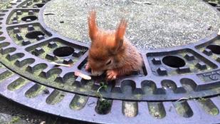 Ennek a mókusnak egy életre elment a kedve az olívaolajtól