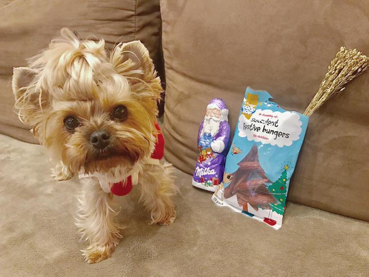 Tolvai Reni kiskutyája virgácsot is kapott, amitől nem tűnik túl boldognak