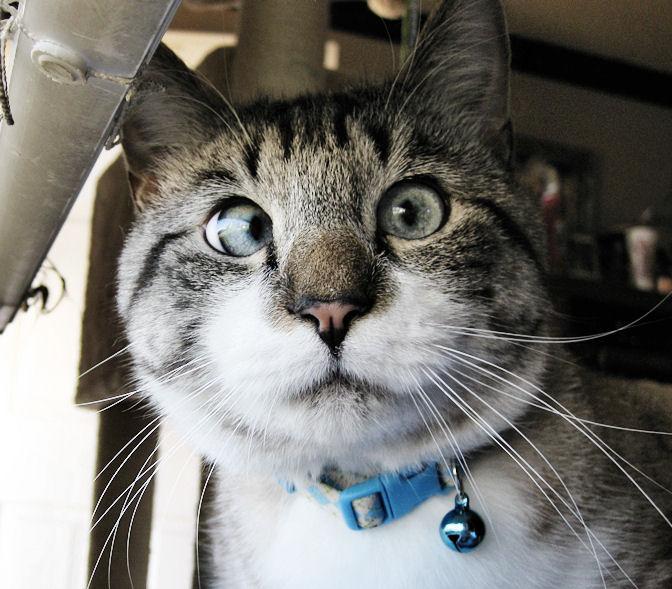 Mi van? Hogy én egy macska vagyok?? Anyám tud erről?