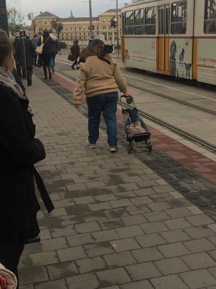 Ilyen macskából viszont valószínűleg csak egy, és az is Budapesten él.