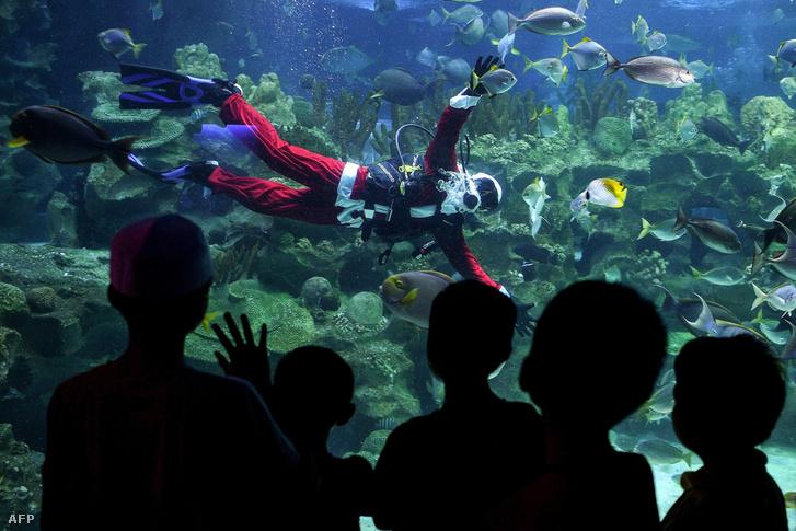 Malajziába is megérkezett a karácsony: vízalatti Télapó üdvözli a gyerekeket a főváros, Kuala Lumpur egyik akváriumában.