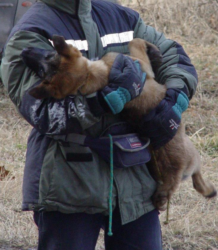 Például azt, hogy 9 hetes korában került Balázs Lászlóhoz, a mentőcsapat vezetőjéhez, aki akkor még a tűzoltóság mentő-kutyás szolgálatának volt a tagja.