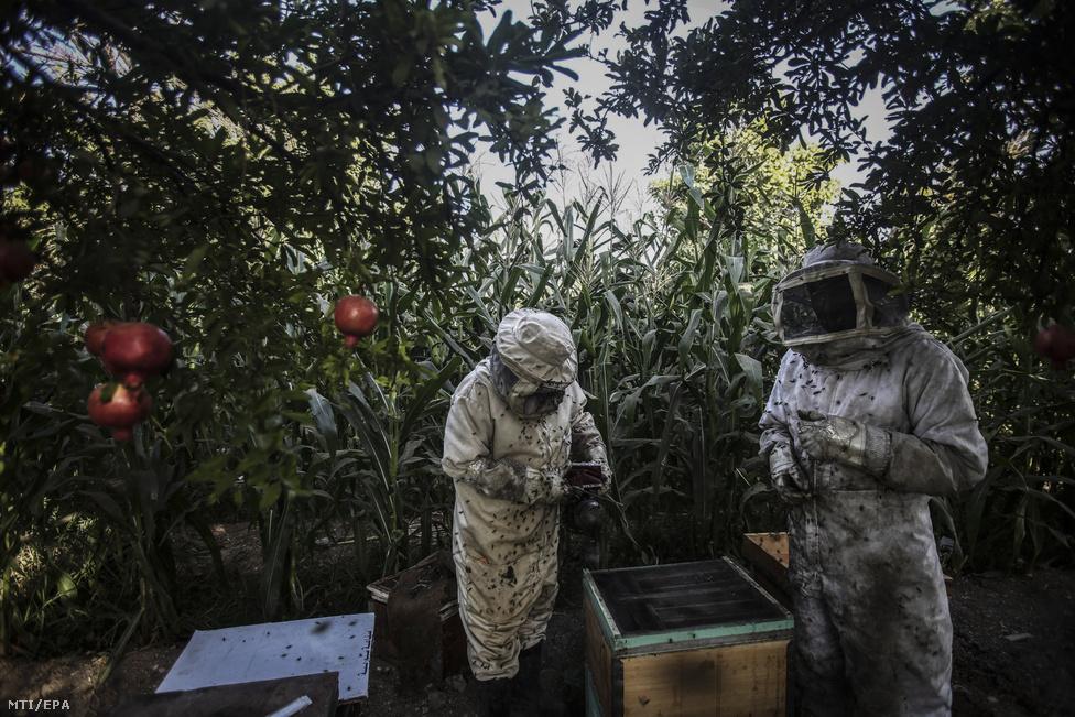 Szíriai méhészek dolgoznak Duma mellett, 2016. szeptemberében.