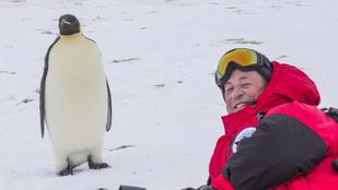 12 ezer kilométert utazott, hogy pingvineket fotózzon lánya emlékére