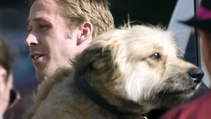 Ryan Gosling imádott kutyája kórházba került