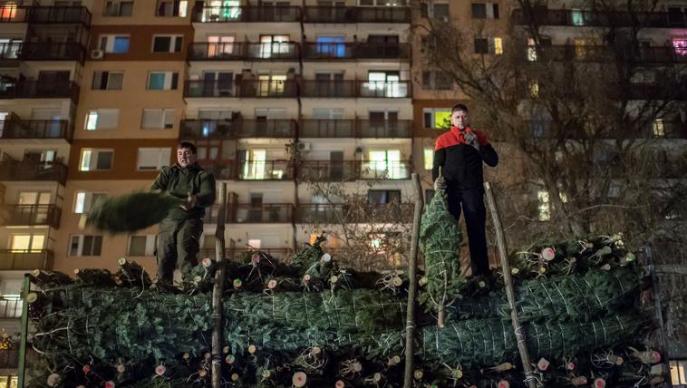 A karikós karácsonyfa útja Zalából a budapesti otthonokba
