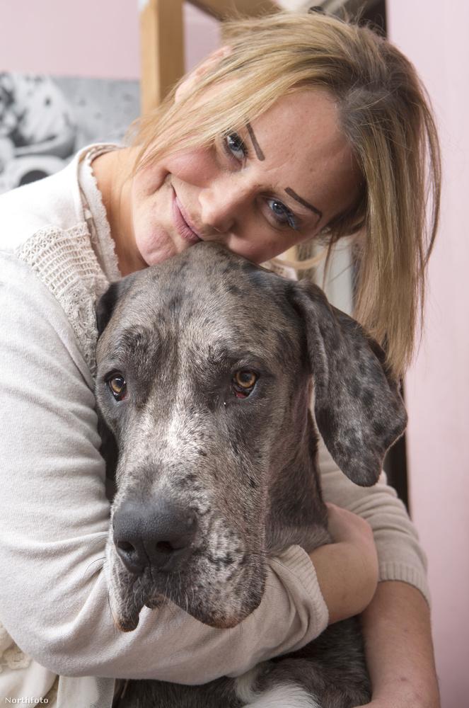 Az óriás méretű kutya gazdája egy középkorú taxisofőr Essex városából
