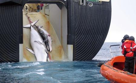 Japán bálnavadászhajó