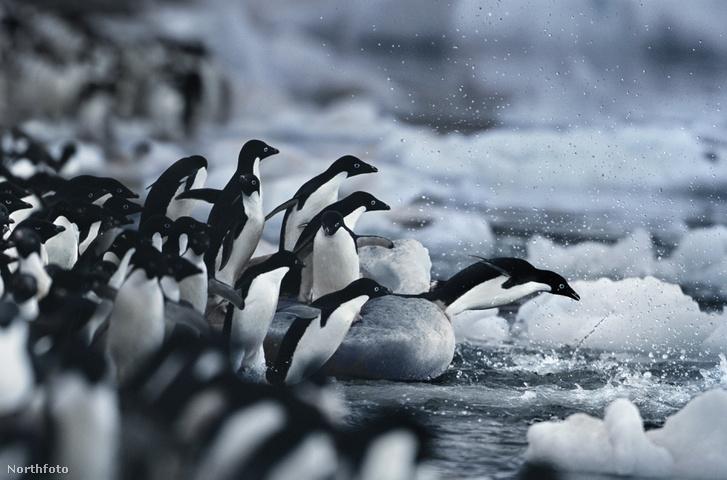 tk3s bm penguins 01001475