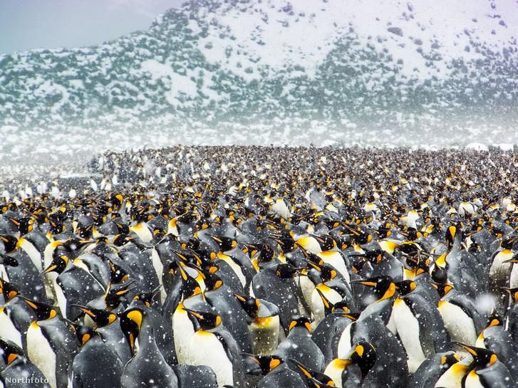 tk3s sn chilly penguin mass 1