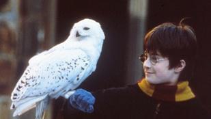 Rettenetes körülmények között él Harry Potter baglya