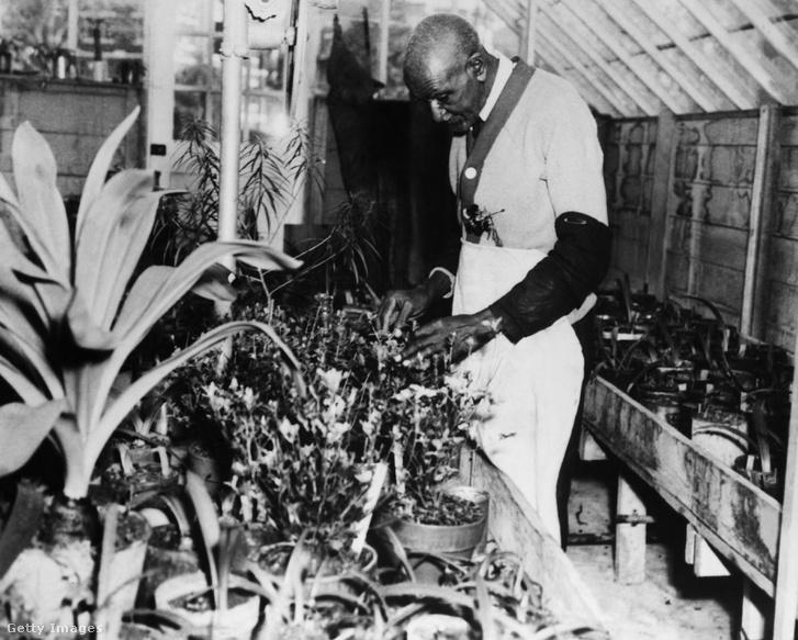 Carver botanikai kutatómunka közben