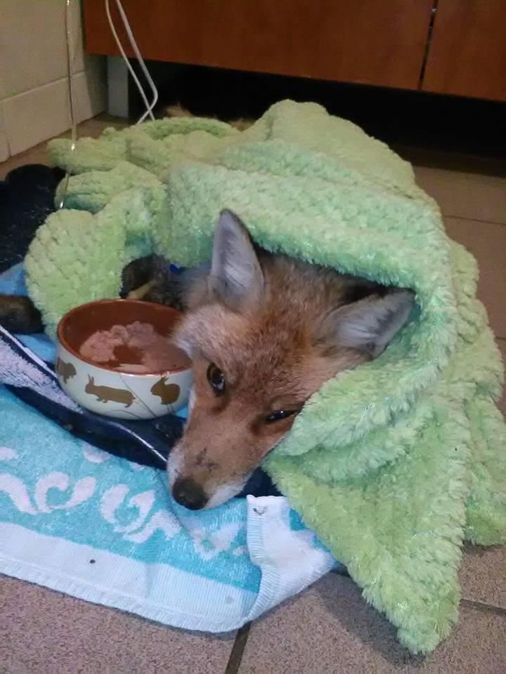 Az Exo-Pet Állatgyógyászati Centrumban lábadozik