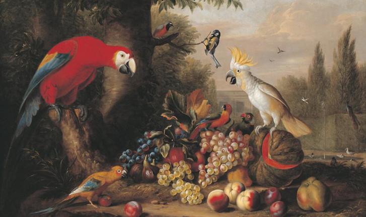 Bogdány Jakab: Sárgaszárnyú ara