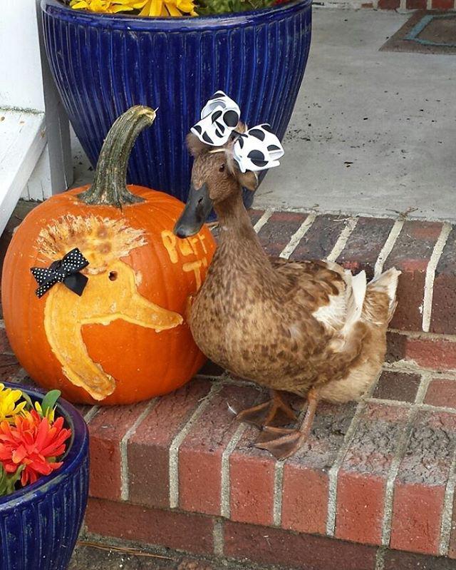 A Halloween-i fotózás nagyon jól sikerült, büszke vagyok a testemre, és remélem, ezzel jó példát mutatok kacsatársaimnak