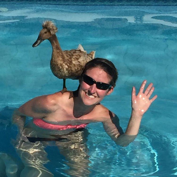 A medencében úszkáló személyek közül a vállon ácsorgó Puff, a kacsa, a váll tulajdonosa pedig Ashley Scott