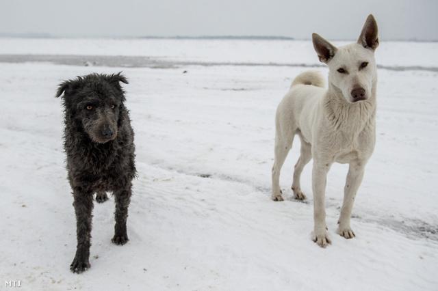 Két kutyasegítő: egy mudi és egy sinka