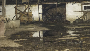 Leégett egy állatmenhely Kiskunlacházán