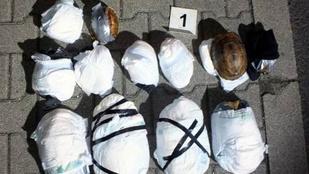 Pelenkában utazott Hongkongtól Komáromig 12 teknős
