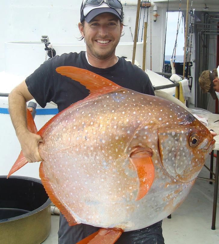 Nicholas Wegner, a NOAA halbiológusa az egyik vizsgált opah társaságában
