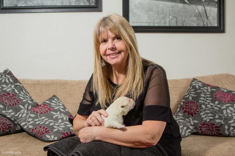 Az biztos, hogy a labrador édesanya, Milly és a kiskutya gazdája, Elaine Cooper is eléggé meglepődött, amikor világra jött a kis Fifi