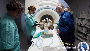 Bogyó 2 az első rétisas a világon, aki MR vizsgálaton esett át