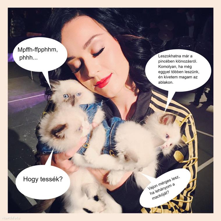 Katy Perry túlzó macskaimádatának célpontjai nem biztos, hogy őszintén vallanának az érzéseikről.