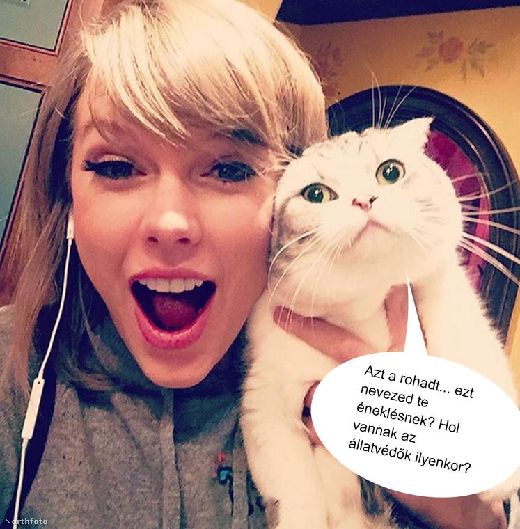 De ne feledkezzünk meg Taylor Swiftről és Skót lógófülű cicájáról sem, aki alighanem egészen másképp vélekedik az énekesnő karrierjéről, mint ön