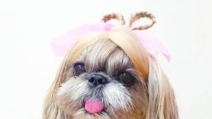 Ez a kutya ma biztos, hogy menőbb hajjal ébredt, mint ön