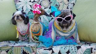 Ha nincs pénze pszichológusra, keresse fel Puffot, a kacsát!