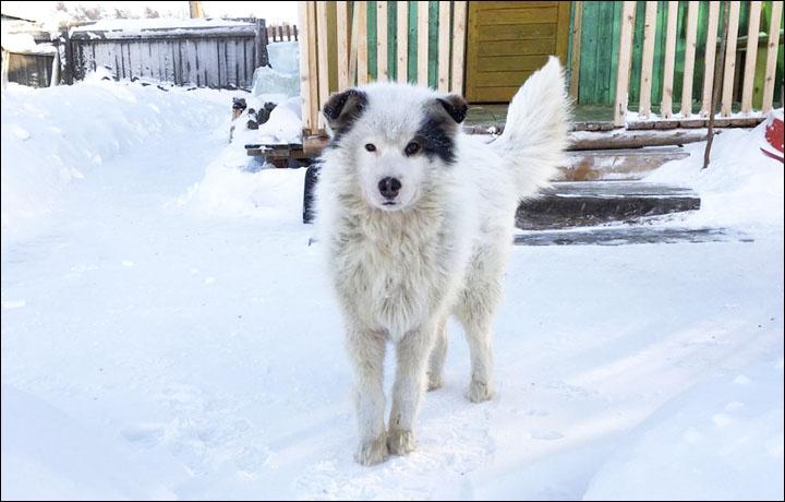 Az életmentő kutya